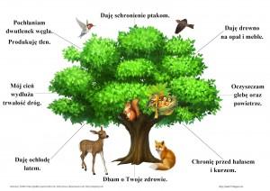 co nam dają drzewa